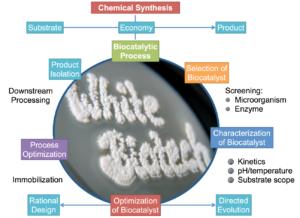 Illustration zur Darstellung der Komplexität der Biokatalyse